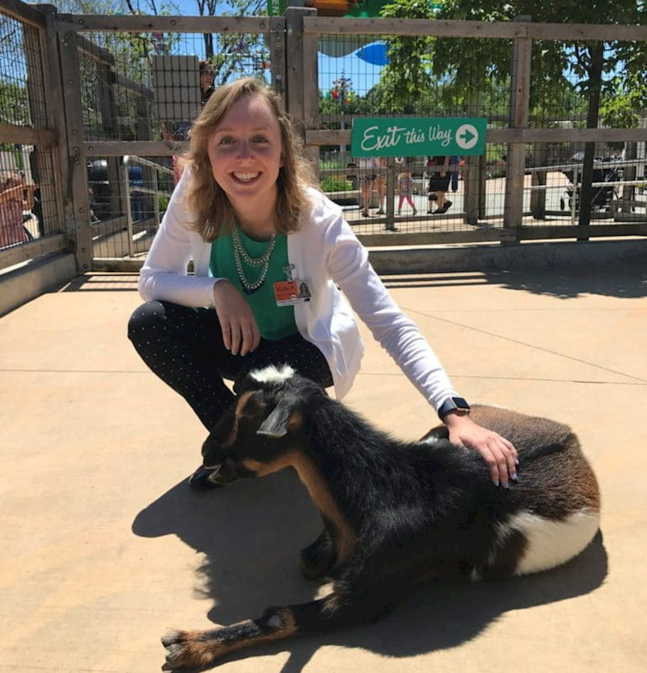 Taming the beast: Journey of an analytics intern at the zoo